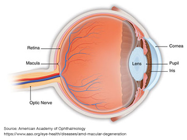 Age Related Macular Degeneration News Releases Mcfarland Clinic